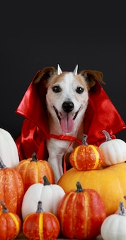 Chien en costume d'halloween fond d'halloween noir