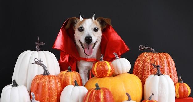 Chien en costume rouge halloween fond noir