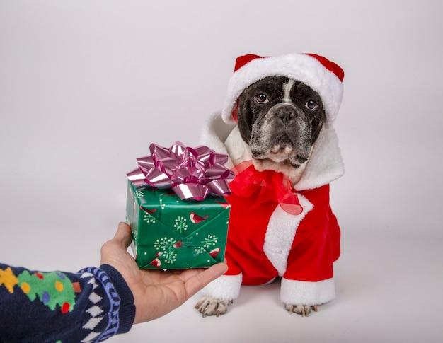 Chien en costume de santaclaus et chapeau recevant un cadeau de son propriétaire.