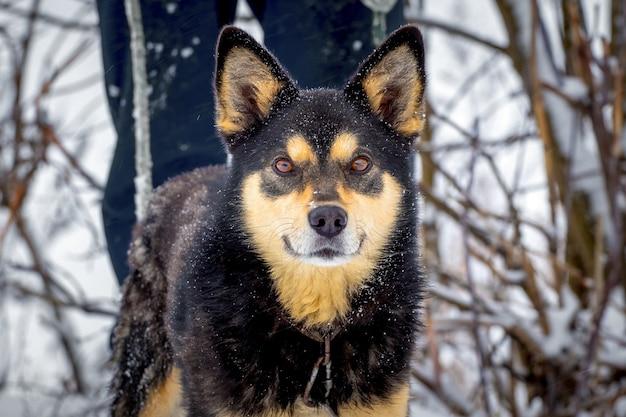 Chien à côté de son propriétaire lors d'une promenade en hiver