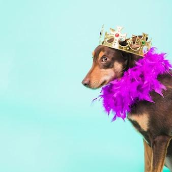 Chien avec une couronne
