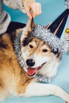 Un chien dans un chapeau de fête sur fond de cadeaux