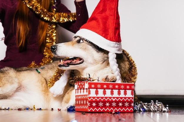 Un chien dans un chapeau de noël repose sur les mains d'une femme sur fond de cadeaux