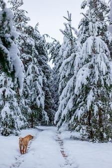 Le chien dans la forêt d'hiver