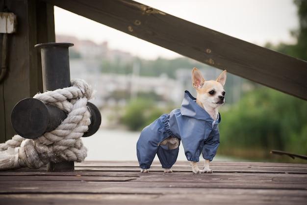 Un chien dans des vêtements élégants sur une promenade.
