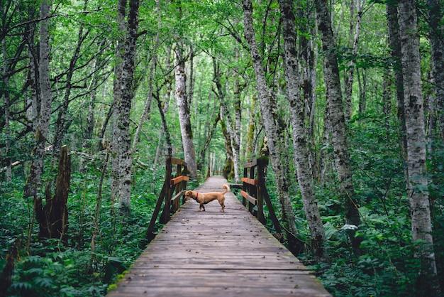 Chien debout sur un sentier forestier en bois