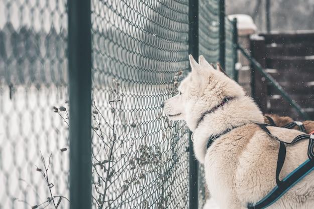 Chien derrière les barreaux