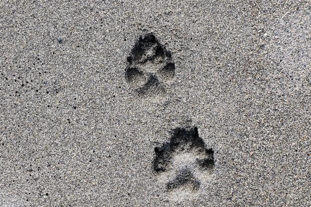Chien deux empreintes digitales sur le sable