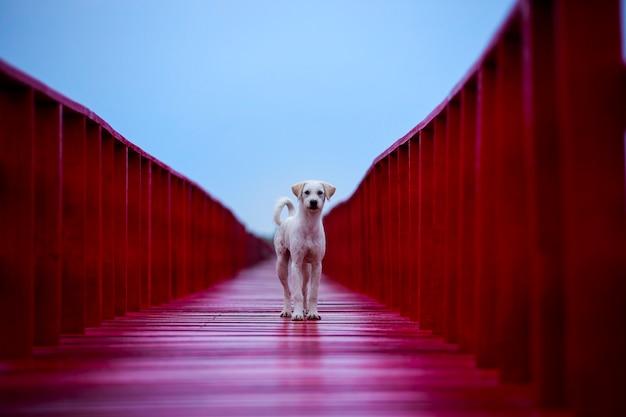Chien domestique debout sur un pont en bois rouge