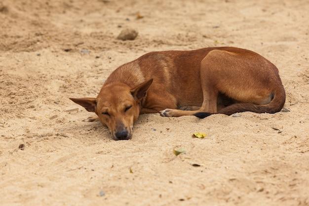 Un chien dormant
