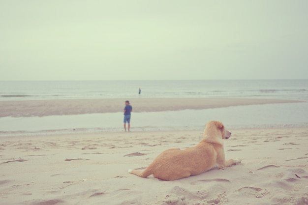 Le chien a dormi sur le sable en mer, se relaxer, chien assis
