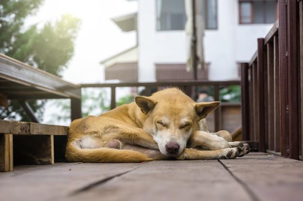 Le chien dort dans la rue, se concentre sur le nez, concept animal