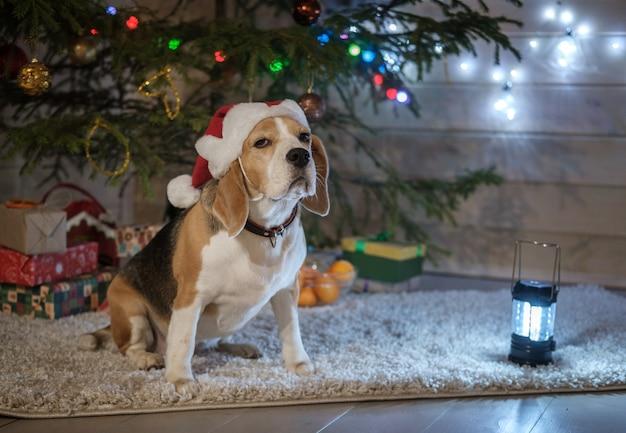 Chien drôle de race beagle dans un bonnet de noel rouge