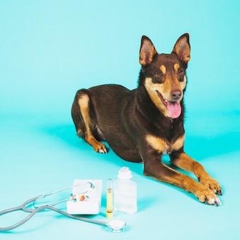 Chien et équipement vétérinaire