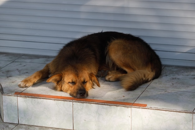 Un chien errant dans la rue de la ville. animaux errants. photo de haute qualité
