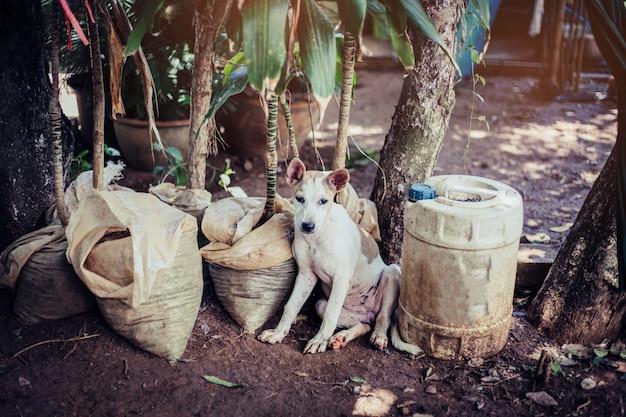 Un chien errant, seul dans la vie en attente de nourriture. chien errant sans abri abandonné est couché dans la rue. petit chien abandonné triste sur sentier.