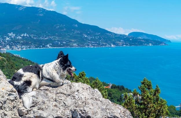 Le chien est allongé sur une grosse pierre sur le fond de la mer, regardant au loin.