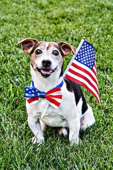 Le chien est assis dans un nœud papillon de drapeau américain avec le drapeau des états-unis sur l'herbe verte en regardant la caméra. célébration du jour de l'indépendance, 4 juillet, memorial day, american flag day, fête du travail