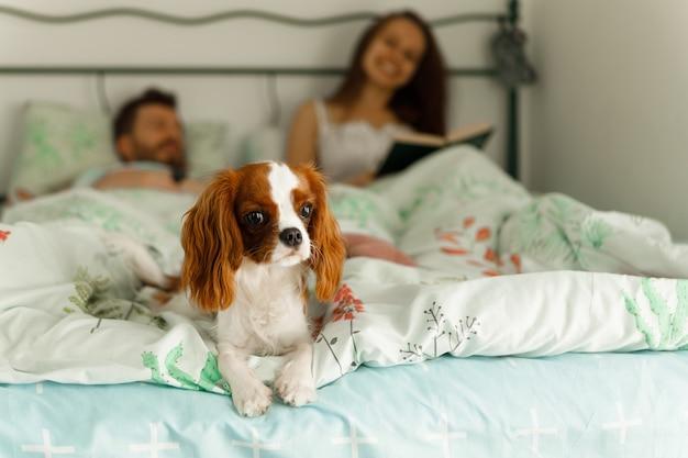 Le chien est couché sur le lit. les hôtes sont flous en arrière-plan.