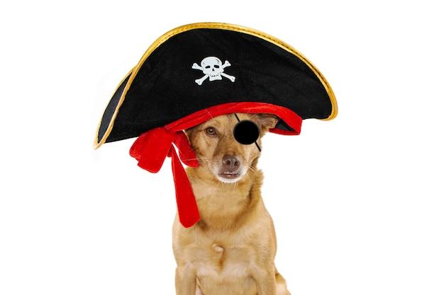 Chien habille dans un chapeau de costume halloween ou carnaval de pirate.