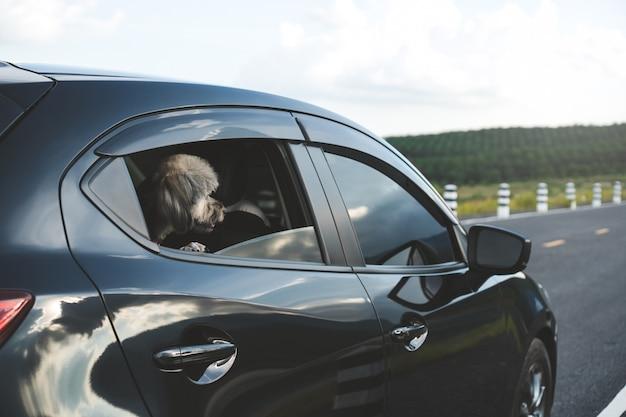 Le chien heureux de race de mélange regarde par la fenêtre de la voiture à hayon noire.