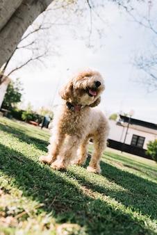 Chien heureux s'amuser dans le parc