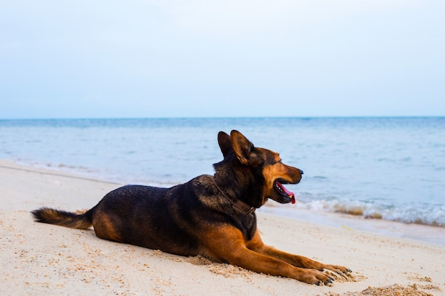 Chien heureux se détendre sur la plage.