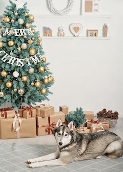 Chien husky près de cadeaux de noël