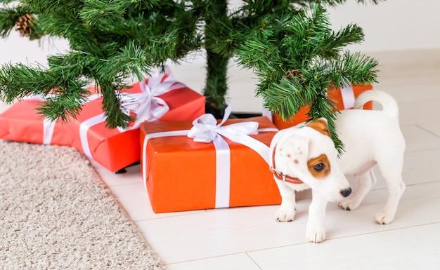 Chien jack russel sous un arbre de noël avec des cadeaux et des bougies pour célébrer noël