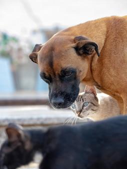 Chien jaune abandonné et chat noir interagissant amicalement