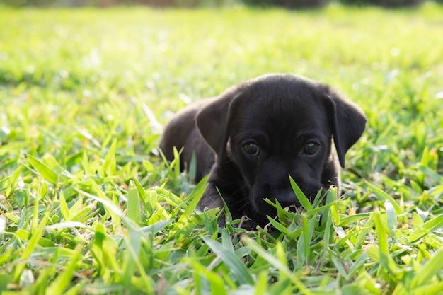 Chien levant les yeux, voulant que quelqu'un joue avec lui ou attend de la nourriture.
