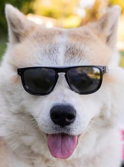 Chien avec des lunettes de soleil, concept d'été