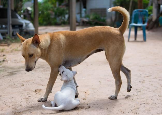 Chien de maman joue avec son chiot