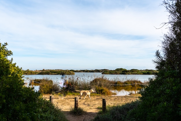 Chien marchant au bord du lac de gavines, près d'une plage de valence, espagne