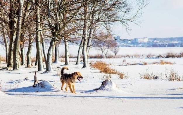 Chien marchant dans la forêt d'hiver un jour ensoleillé_