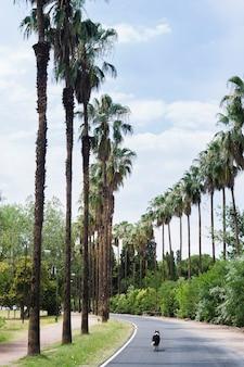 Chien marchant sur un paysage tropical