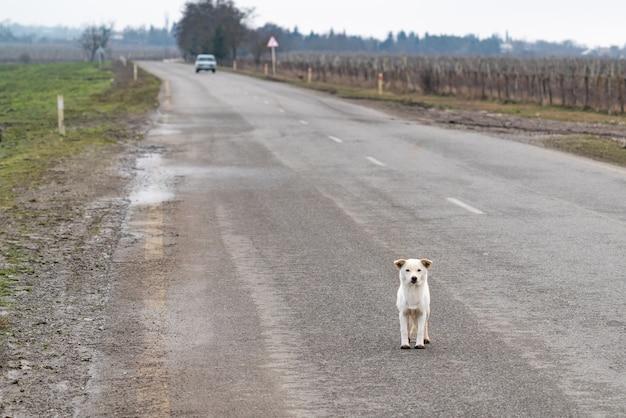 Le chien mignon attend son propriétaire sur la route