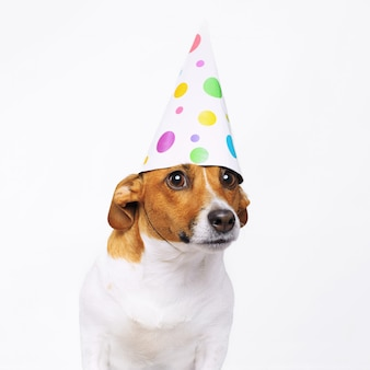 Chien mignon en chapeau de fête de carnaval fête son anniversaire.
