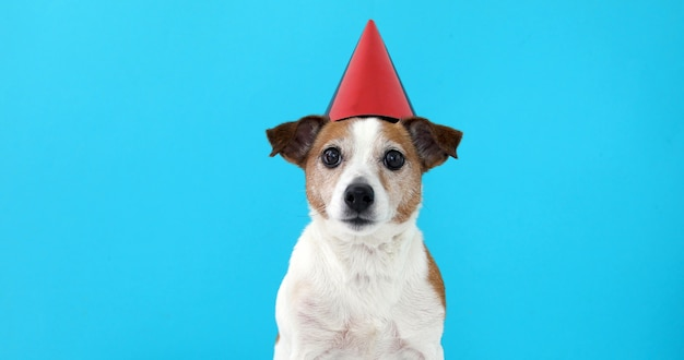Chien mignon en chapeau de fête rouge conçu