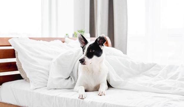 Chien mignon dans le lit