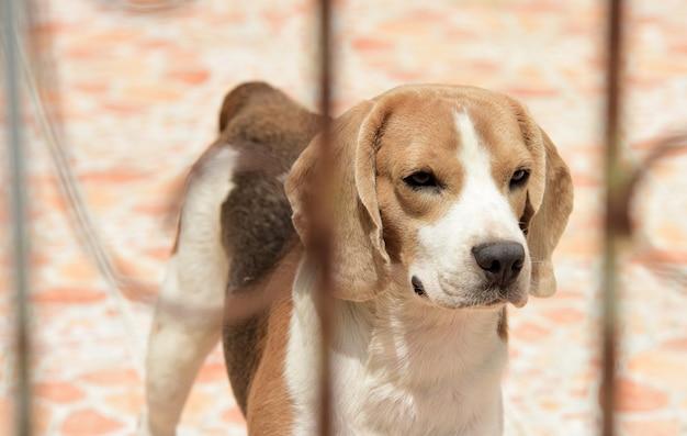 Un chien mignon piégé derrière une porte en acier. beaucoup de chiens mignons.