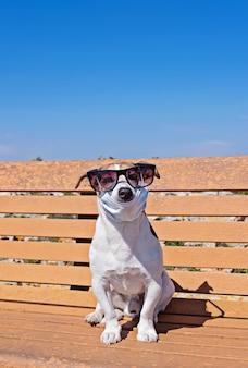Chien mignon porte des lunettes de soleil et un masque facial assis sur un banc
