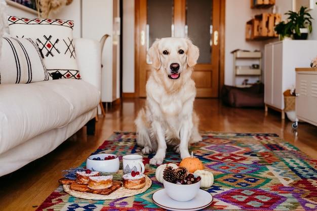 Chien mignon retriever doré à la maison. petit-déjeuner sain avec du thé, des fruits et des bonbons.