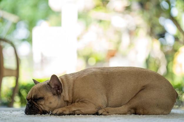 Chien mignon de sommeil sur le tapis d'intérieur