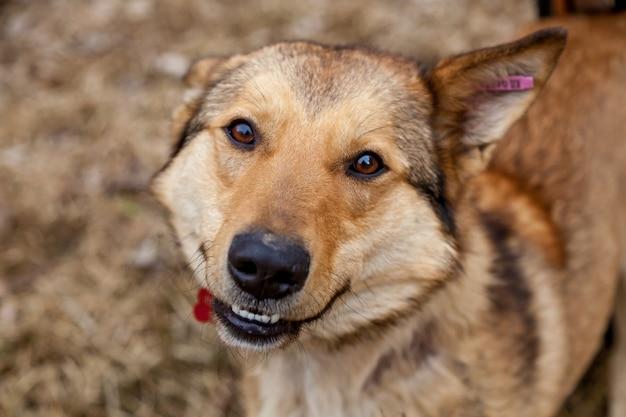 Chien mixte aux cheveux roux avec la maîtresse se promène dans le parc. portrait d'un chien rouge dans la rue