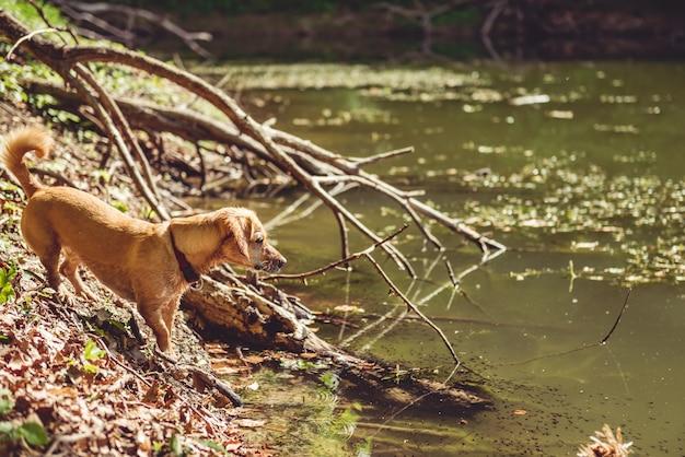 Chien mouillé au bord du lac