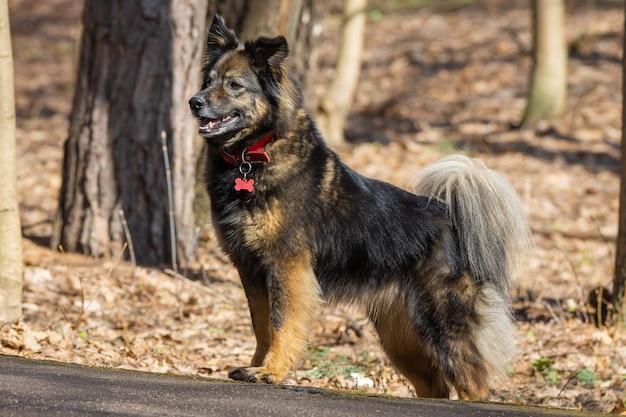 Un chien sur la nature