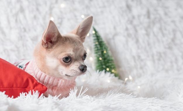 Chien de noël chien chihuahua en pull se trouve sur une couverture