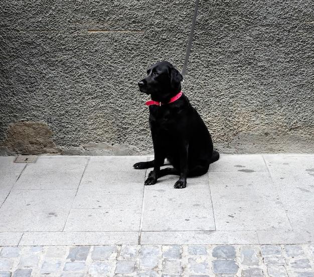 Chien noir dans un collier rouge dans la rue