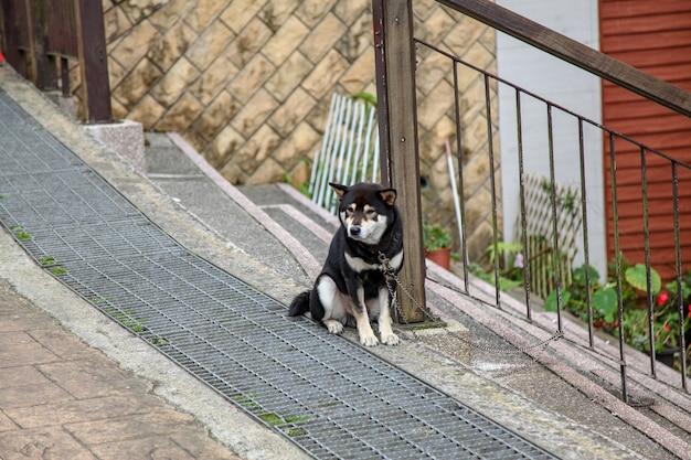 Le chien noir s'asseoir attend que les gens rentrent à la maison